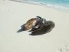 galapagos-teil-2004