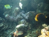 unterwasser02