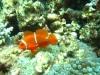 unterwasser09