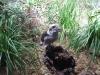 wildlife-sydney07