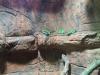 wildlife-sydney08