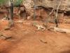 wildlife-sydney09